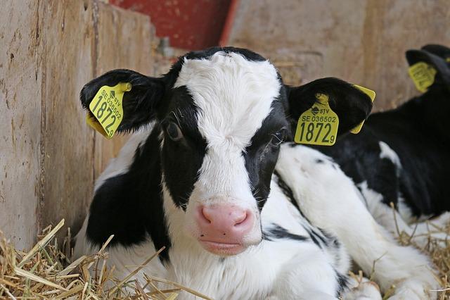 Web-agriculteur.com